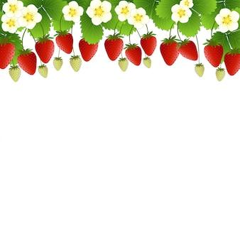 Rode aardbei en bloemachtergrond