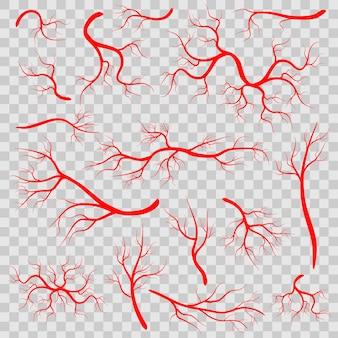 Rode aderen, menselijke bloedvaten, gezondheidsslagaders.
