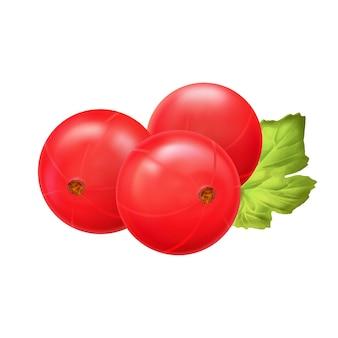 Rode bes. realistische vectorillustratie van bessen op witte achtergrond Premium Vector