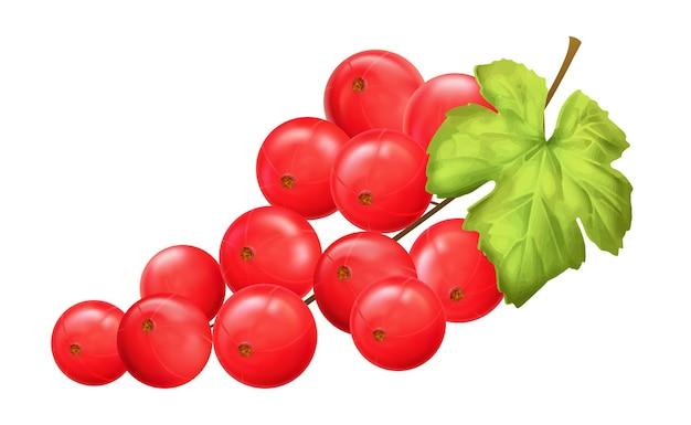 Rode bes. realistische vectorillustratie van bessentwijg op witte background