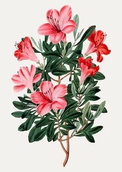 Rode chinese azalea