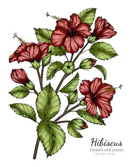 Rode hibiscusbloem en bladtekeningillustratie