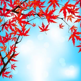 Rode japanse esdoornbladeren tegen blauwe hemel.