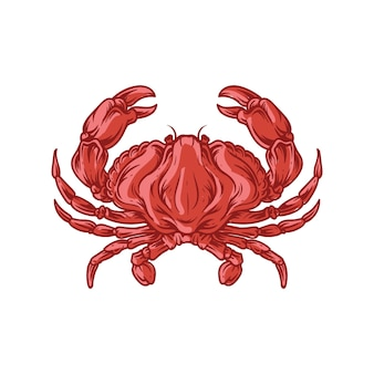 Rode krabben oceaan dier