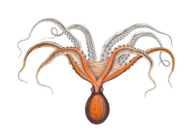 Rode octopus