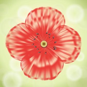 Rode papaverbloem met transparante bloemblaadjes op groene achtergrond