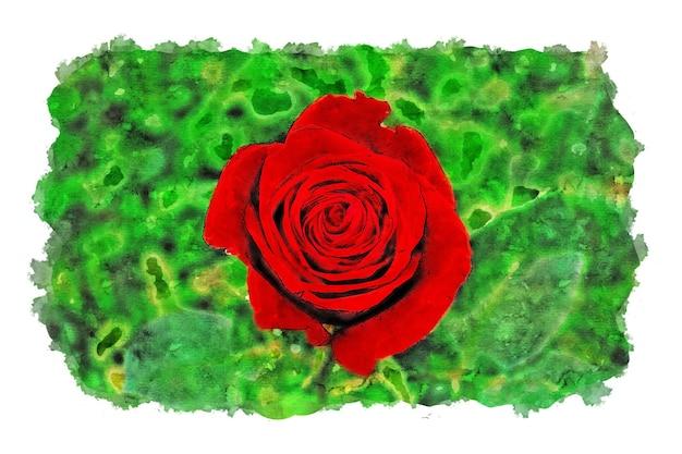 Rode roos en groene achtergrond aquarel