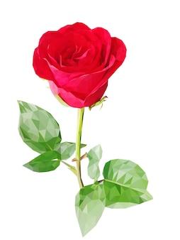 Rode veelhoek roos