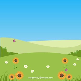 Rolling klif landschap met zonnebloemen