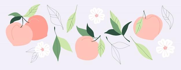 Ronde perzik abrikozenvruchten, bladeren en bloemen. set van trendy hand getrokken illustraties. gezonde natuurvoeding, sappige zomerfruitelementen