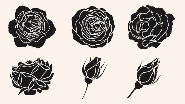 Rose ornament vector met de hand tekenen