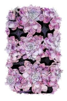 Roze bloemen aquarel