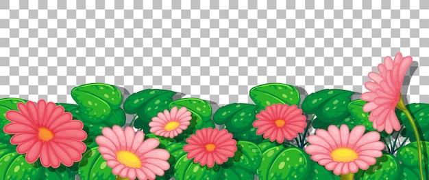 Roze bloemen met bladeren op transparante achtergrond