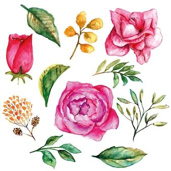 Roze bloemen roos set met bladeren aquarel