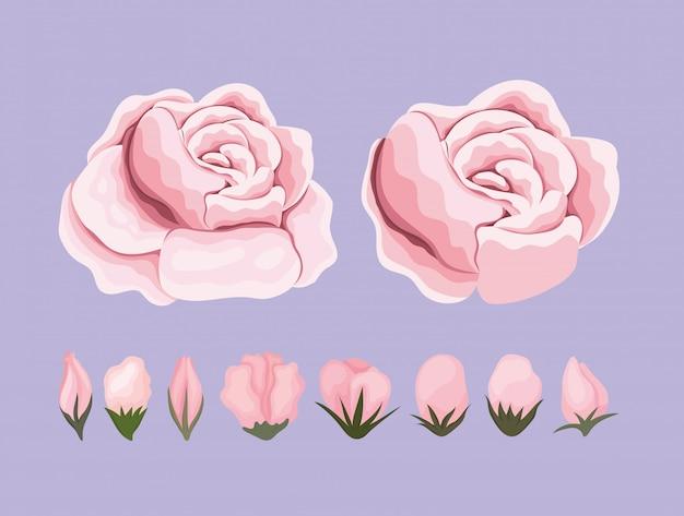Roze bloemen schilderij ontwerp, natuurlijke bloemen natuur plant ornament tuindecoratie en plantkunde thema illustratie