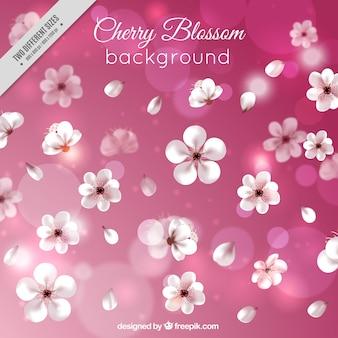 Roze bokeh achtergrond van kersenbloesems