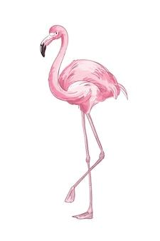 Roze flamingo hand getekende illustratie