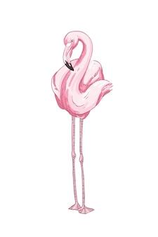 Roze flamingo hand getekende vectorillustratie. mooie exotische vogel met lange benen en lange nek geïsoleerd op een witte achtergrond. elegant dier met felroze verenkleed. tropische fauna, dieren in het wild.