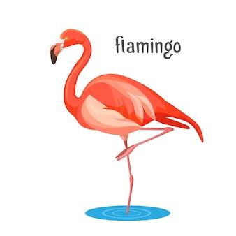 Roze flamingo lange waadvogel met roze of scharlakenrode verenkleed en lange poten en nek. dier boog zich voorover om water te drinken, in een cirkel