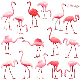 Roze flamingo set.