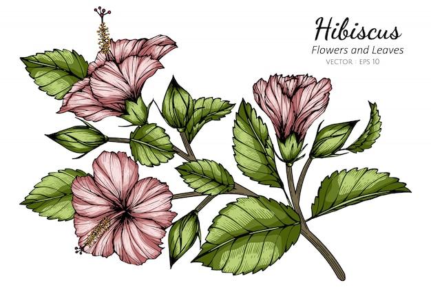Roze hibiscusbloem en bladtekeningillustratie met lijnkunst op witte achtergronden.