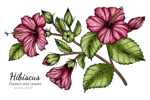 Roze hibiscusbloem en bladtekeningillustratie