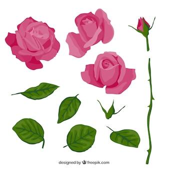 Roze roos in delen