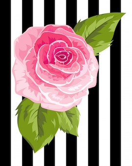 Roze roosknop