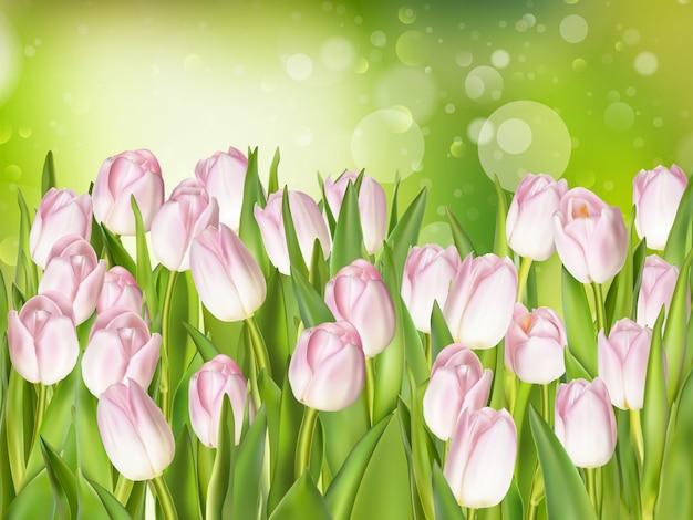Roze tulpen op zachte achtergrond.