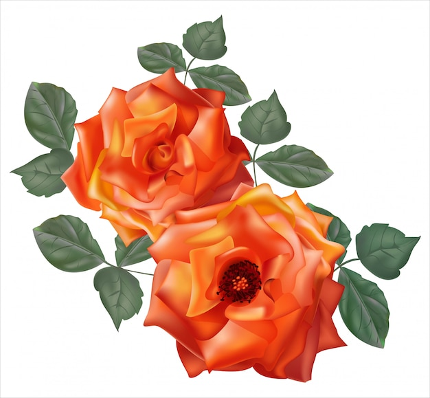 Rozen oranje bloem