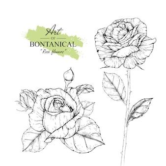 Rozenblaadjes en bloemtekeningen. vintage hand getrokken botanische illustraties. vector.
