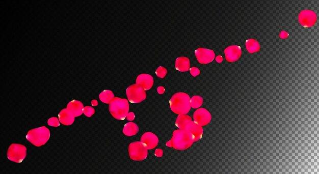 Rozenbloemblaadjes realistisch in transparante vectorillustratie als achtergrond
