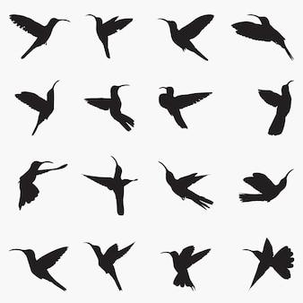 Sabrewing silhouetten illustratie