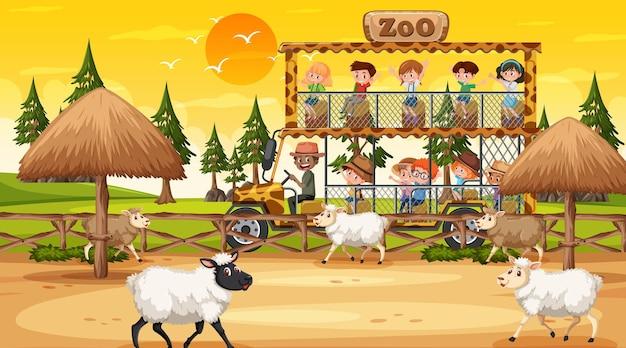 Safari bij zonsondergang met veel kinderen die naar de schapengroep kijken