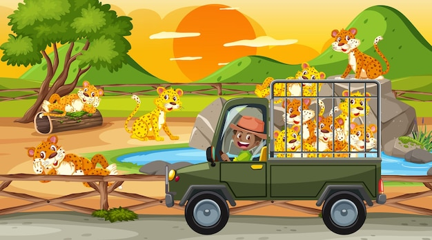 Safari bij zonsondergangscène met luipaardgroep