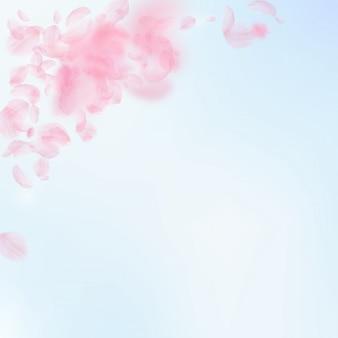 Sakura bloemblaadjes vallen. romantische roze bloemenhoek. vliegende bloemblaadjes op blauwe hemel vierkante backgroun