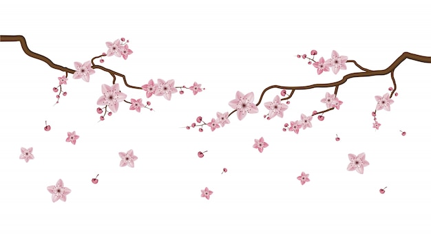 Sakura bloesem bloemen