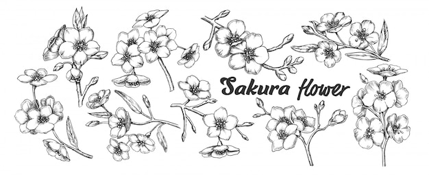 Sakura collectie boomtakken set vintage