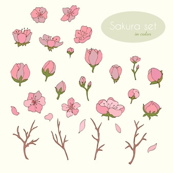 Sakura set in kleur. bloemen. kers. sakura. vector illustratie. vector. voorraad vector. artikelset. bloemblaadjes