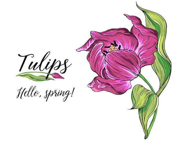 Samenstellingen van vector gekleurde tulp bloemen, lentebloemen