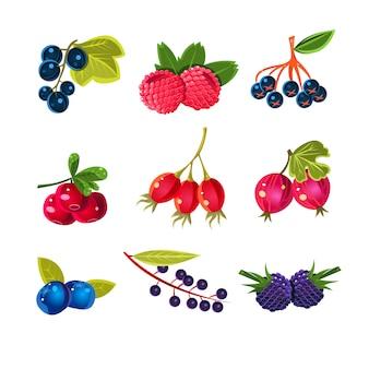 Sappige kleurrijke bessen set
