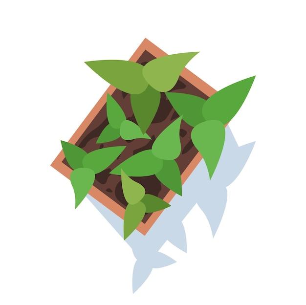 Sappige semi-platte rgb-kleur vectorillustratie. plant in bloempot. groeiende bladeren. oogstend gewas. decoratieve kamerplant. bloempot geïsoleerd cartoon object bovenaanzicht op witte achtergrond