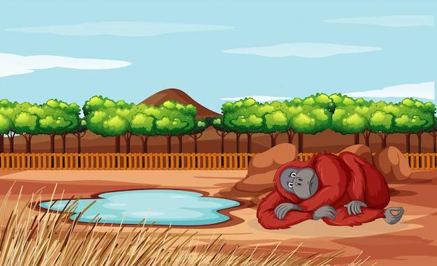 Scène met aap in de dierentuin