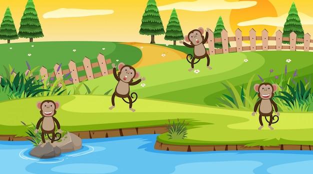 Scène met apen in het park