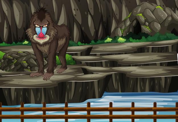 Scène met baviaan in de dierentuin