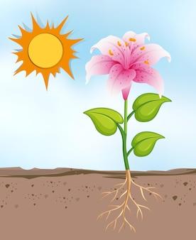 Scène met bloemen die groeien op de heldere zonnige dag