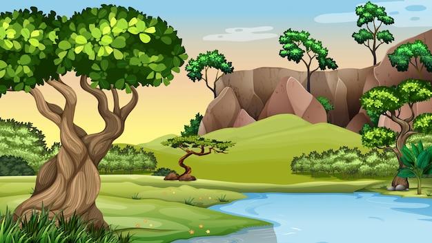 Scène met bomen bij de vijver
