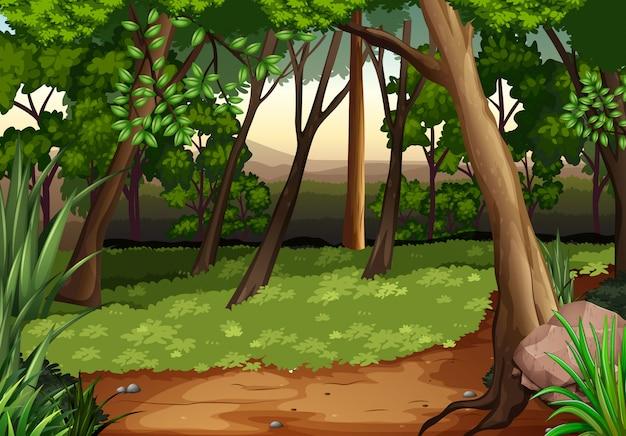 Scène met bomen en veld in het bos
