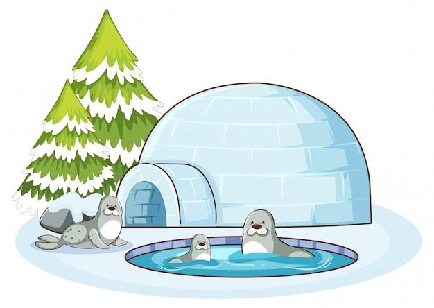 Scène met drie zeehonden en iglo