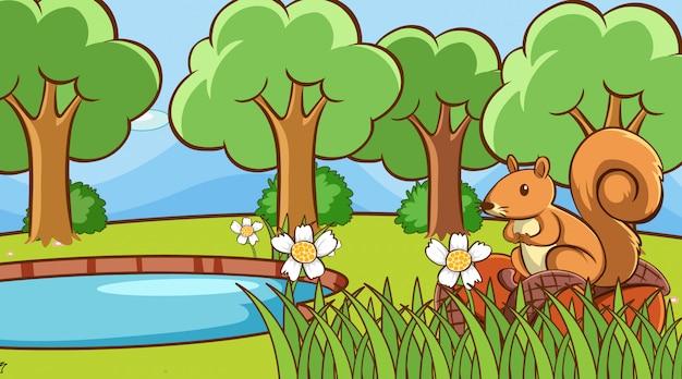 Scène met eekhoorn door de vijver
